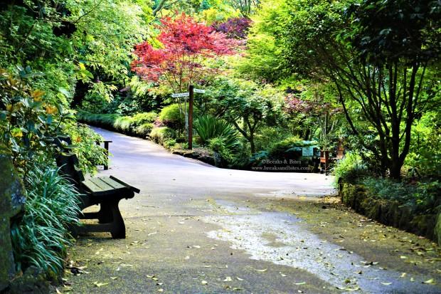 Eden Garden Auckland