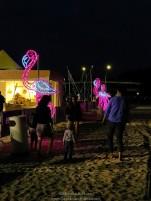 Flamingos at beach