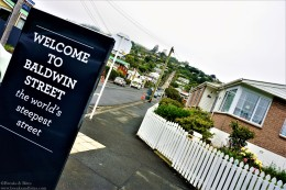 World's steepest residential street