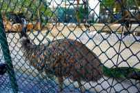 Zoo23