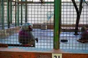 Zoo26