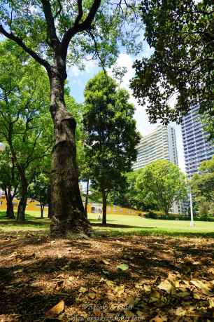 All about old trees and lush green grass