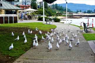 These seagulls were definitely bothering everyone around! Did not like their poking attitude at all :-/