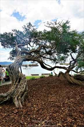 Look at this tree!