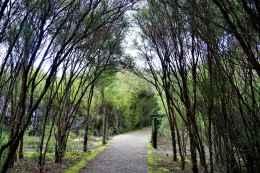 Kuirau Park16