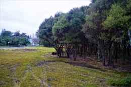 Kuirau Park17