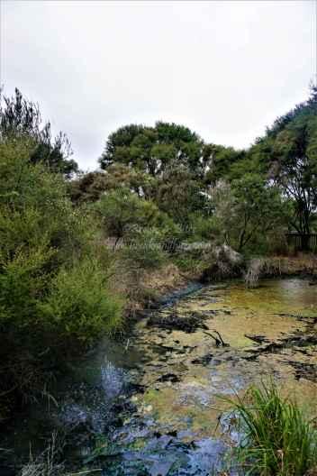 Kuirau Park25