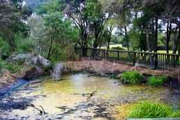 Kuirau Park26