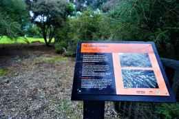 Kuirau Park27